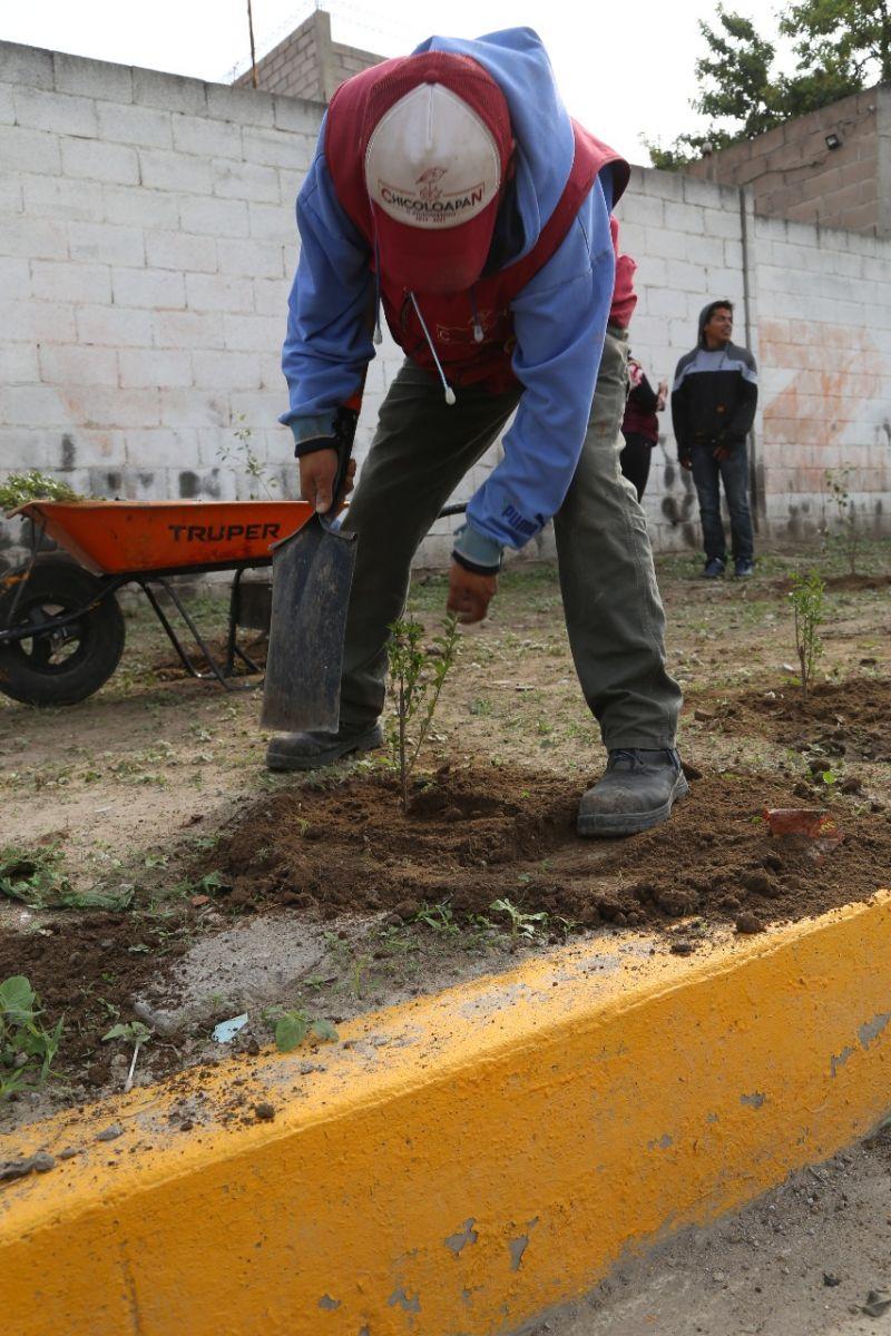 Reforestación Para Embellecer La Imagen De Nuestro Municipio